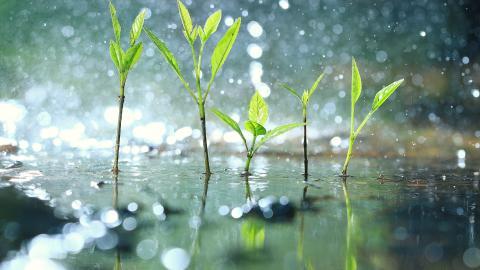 Regenwassermanagement Seminare FRÄNKISCHE