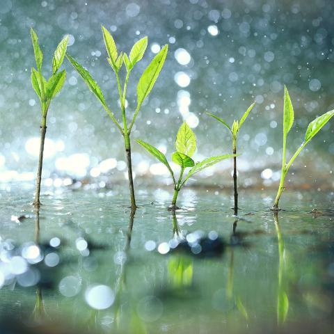 Regenwassermanagement FRÄNKISCHE