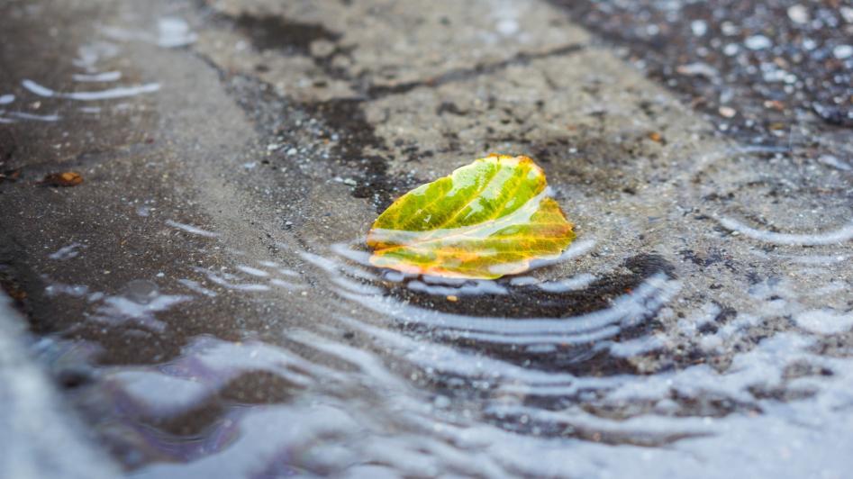 Regenwasserreinigung leicht gemacht