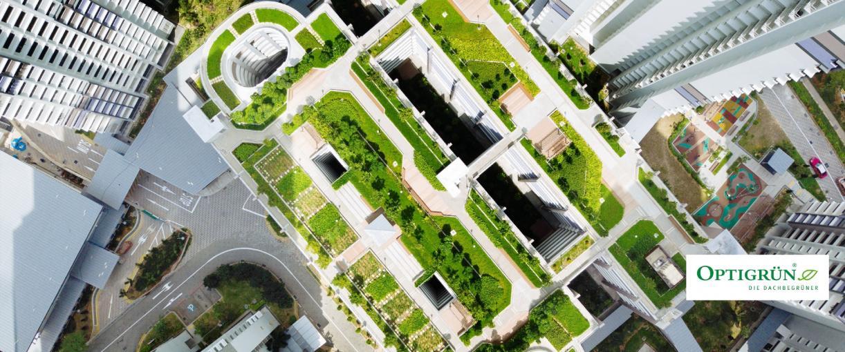 Dachbegrünung trifft auf Regenwassermanagement