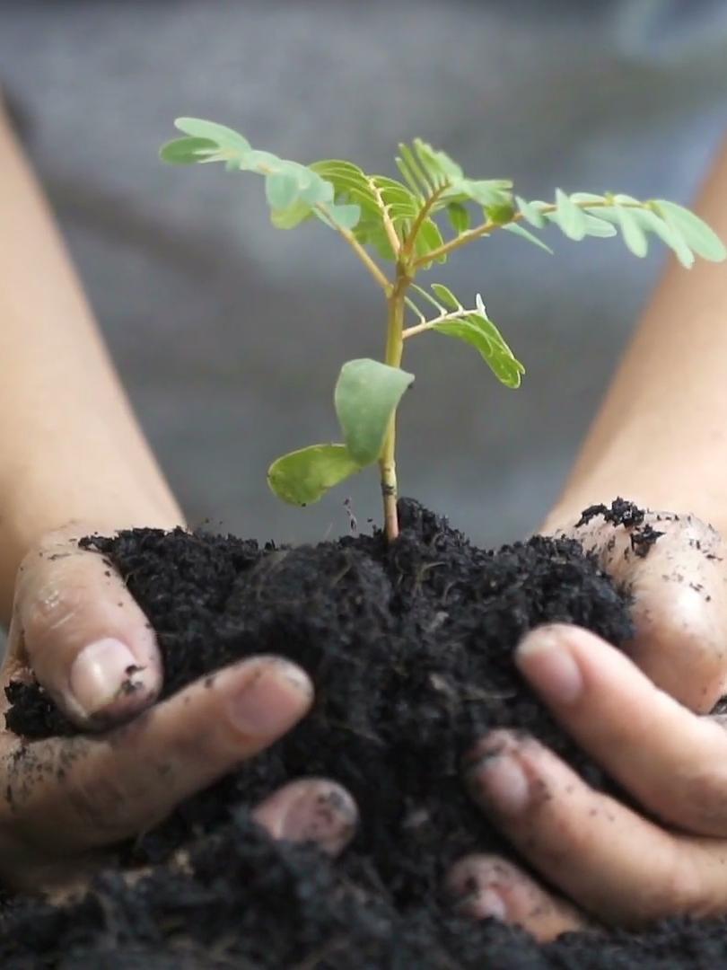 Ökologisch Bauen mit FRÄNKISCHE